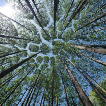 Erholungsraum Wald